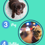 Which Puppy is Most Popular? Test Your Dog's Brand Awareness!